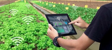 Hydroponic with IoT Devices
